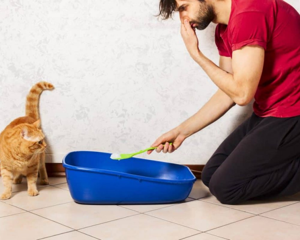 Feces And Urine – Biohazard Cleaning That's Practical